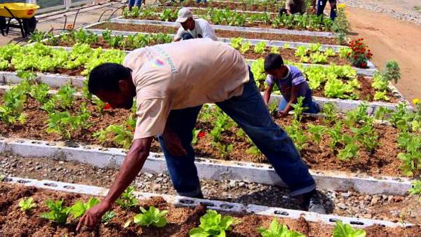 La Misión Agro empieza a transformar el campo en toda Venezuela - Foto: Agencia Venezolana de Noticias