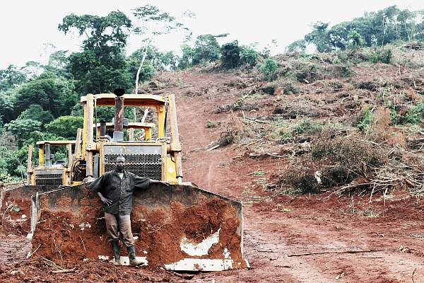 Después de haber  despojado a cientos de campesinos, la multinacional Bidco destruye cientos de hectáreas de bosque para plantar cultivos destinados a  agrocombustibles en Kalangala (Uganda) - Foto: Jason Taylor, Amigos de la Tierra Internacional