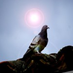 Diálogos de paz: balance y perspectivas